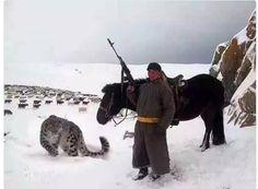 Kırgız çoban evcil ayparsı ile ..!!