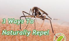 3 Ways To Naturally Repel Mosquitos