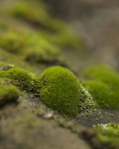 I can almost feel the moss under my feet! Woodland Moss Photograph Photo Nature Photography by DovieMoon,