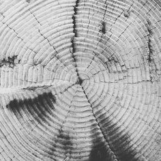 Papers.co wallpapers - vj38-old-tree-texture-pattern-bw - http://papers.co/vj38-old-tree-texture-pattern-bw/ - pattern