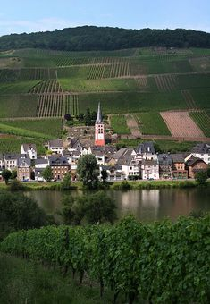 Zell Mosel River