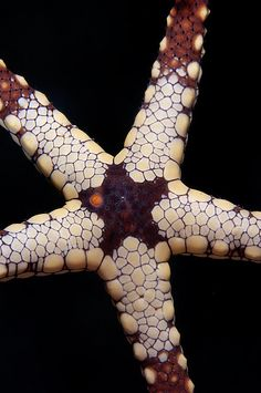 Starfish by randapex, via Flickr