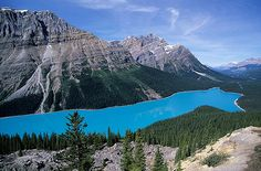 Peyto Lake - canadian rockies