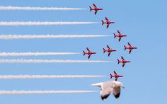 The fantastic picture shows the seagull take the place of a red arrow  at the Llandudno Air Show on Saturday. See Ross Parry copy RPYARROW. A stunning image that shows the latest addition to the world famous Red Arrows is a SEAGULL has become an Internet hit. The amazing moment was captured by first year photography student Jade Coxon