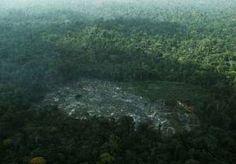 21-May-2013 16:09 - ONTBOSSING AMAZONE BIJNA VERDUBBELD. Vorig jaar werd 1.500 vierkante kilometer Amazonewoud vernield, een stijging met 88 procent tegenover 2011. De laatste jaren werden er steeds…...