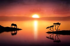 """500px / Photo """"The Horse at Sunset"""" by Jenny Woodward"""
