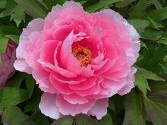 立てば芍薬、座れば牡丹、歩く姿は百合の花。 | ちいさな笑顔