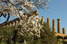 Almond Blossom, Stunning View, Summer Looks, Folklore, Flowers, Plants, Image, News, Google