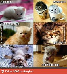 Image detail for -9GAG - Big bang theory kitty song