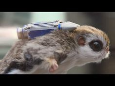 McVitie's Flying Squirrel TV Ad – New Breakfast Oaty Breaks. Tv Adverts, Tv Ads, Flying Squirrel, Childhood, Funny, Animals, Breakfast, Morning Coffee, Infancy
