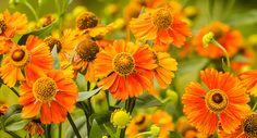 Orange flowers of happiness,photographers Anna Matveeva, #AnnaMatveeva #FineArtPhotography # ArtForHome #FineArtPrints