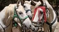 Horse riding holiday in Spain.