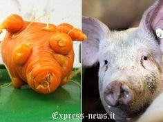 maiale o carota?