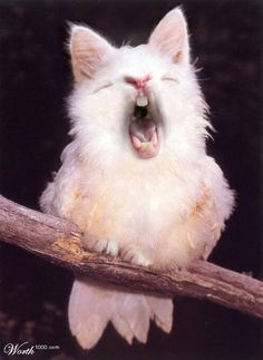 """ALBINO TAWNY FROGMOUTH"" is the caption under this one, but a tawny frogmouth is a bird. Someone 'shopped a rabbit's face and a cat's ears onto it. Of course if you look at the website in the corner of the picture you see its from a photoshop contest page called worth1000.com ;)"