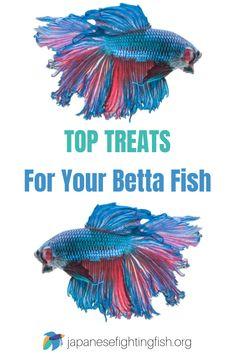 how to take care of betta fish - Expert Aquariums Colorful Animals, Colorful Fish, Unique Animals, Betta Fish Toys, Betta Fish Care, Saltwater Aquarium Fish, Freshwater Aquarium, Fishing World, Beta Fish