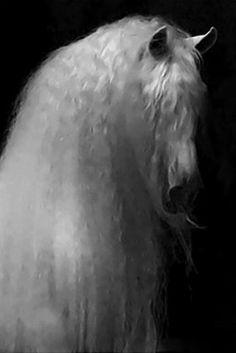 Untitled - White Stallion with stunning mane.
