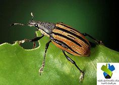 طرق مكافحة الافات الزراعية ؟ تعرف كيف يمكن الوقاية من الآفات النباتية والأمراض ومكافحتها احدث اساليب جميع الحشرات الضارة.