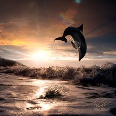 beautiful sunset and dolphin leaping out trough sea foam by Vitaliy Sokol on 500px