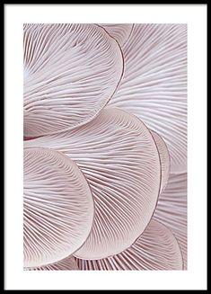Pink oyster pattern one Plakat i gruppen Plakater hos Desenio AB (3652)