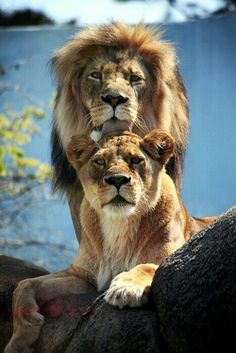 Padre e Hijo ahq decia ja