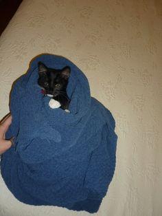 Baby Cats, Animals, Gatos, Animales, Animaux, Animal, Animais, Kitty, Cat