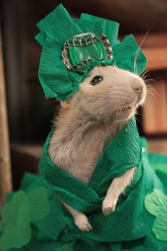 Fancy rat dressed up for a ball!