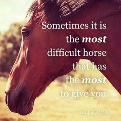 Die besten schwierigen Pferde sind oft die besten Lehrer – sprüche – … The best difficult horses are often the best teachers – sayings – Rodeo Quotes, Equine Quotes, Equestrian Quotes, Racing Quotes, Equestrian Problems, Western Horse Quotes, Cowboy Quotes, Funny Horses, Cute Horses