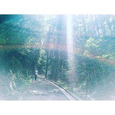 【2525rin】さんのInstagramをピンしています。 《20160916 ……… 私的奇跡の一枚、 とてもお気に入りな写真📷 稲荷山はなかなか過酷だったけど 涼しいし雰囲気あるし奥に行けば行く程 静かで素敵な場所だったな〜〜 浄化されてる気分だった〜〜 勉強集中切れてしまってぴ〜〜んち〜〜 がんばる〜〜〜〜 #稲荷山 #森 #光 #虹  #mtinari #forest #light #rainbow  #iphone6 #写真すきな人と繋がりたい》