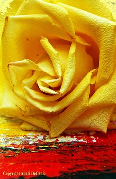 Abstract Rose by MY PINK SOAPBOX, via Flickr