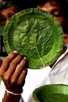 truly green plate - Colombo, Sri-lanka