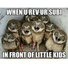 27 Best Subaru Memes images in 2016   Subaru, Cars, Subaru wrx
