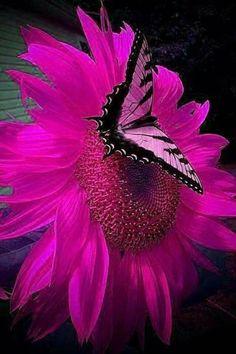 My beautiful butterfly 🦋 Butterfly Wallpaper, Butterfly Flowers, Pink Wallpaper, Flower Art, Beautiful Bugs, Beautiful Butterflies, Amazing Flowers, Beautiful Flowers, Beautiful Creatures