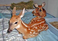 Erie Wildlife Rescue. Canada.