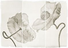 "mondonoir:  Brigitte Carnochan ""Platinum/Palladium"" Wedding Poppies, 2012, Platinum print"
