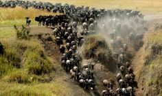 Najlepšie safari v Afrike | edovolenky.sk
