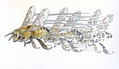 Noel Badges Pugh is quite an artist. Not only are his renderings stunning his concepts are as well. Bees - Full Pollen Basket