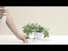 Herb stand, How-to video