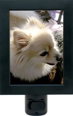 Make a custom night light from your pet photo. #greatgifts #cool #nightlight #pets