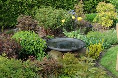 Bird Bath Garden, Vand, Natural Garden, Garden Inspiration, Bassinet, Outdoor Gardens, Rust, Outdoor Decor, Outdoor Ideas