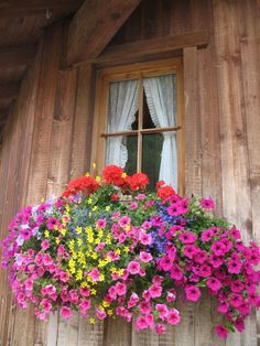 Beautiful flower box, love all the colors