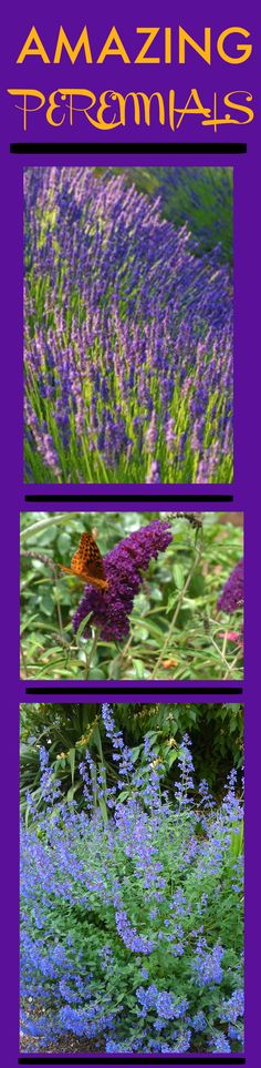 Looking for color for your front yard? Take a look at these gorgeous, low maintenance perennials! http://www.landscape-design-advice.com/perennial-flowers.html