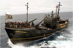 Join the Sea Shepherds for a mission at sea