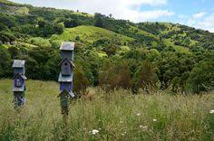 Bird Houses   French Farm, New Zealand (59)   Flickr - Photo Sharing!