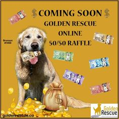 BIG NEWS!! Announcing a new fundraising initiative! Golden Rescue is going to be holding its first ever online 50-50 draw! Stay tuned for more details in the coming weeks. *Due to AGCO rules, only Ontario residents are eligible to play* #goldenretriever #rescuedog #onlineraffle #5050 #buytickets