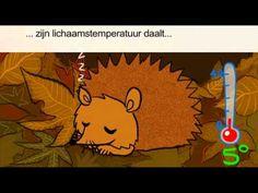 Wat doet een egel in de winter? - YouTube