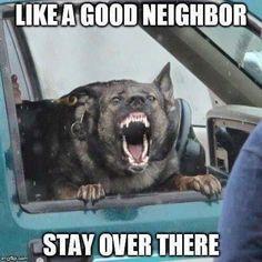 Wicked Training Your German Shepherd Dog Ideas. Mind Blowing Training Your German Shepherd Dog Ideas. Funny Dog Memes, Funny Animal Memes, Cute Funny Animals, Funny Animal Pictures, Dog Pictures, Funny Dogs, I Love Dogs, Cute Dogs, Big Dogs