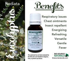 Eucalyptus Radiata Essential Oil is efreshing and energizing. Eucalyptus radiata is gentle, nonirritating, and the most versatile Eucalyptus oil. It is a great ingredient for throat and cough remedies and chest ointments. It's a good oil to add to insect repellents, but it is most well-known for its effectiveness against fevers and respiratory issues. #aromatherapy