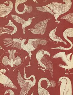 katie-scott: Birds Wallpaper in Animalium