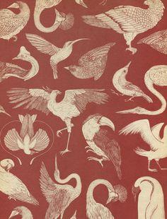 katie-scott:  Birds Wallpaper in Animalium