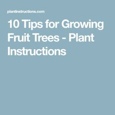 10 Tips for Growing Fruit Trees - Plant Instructions